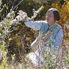 Alderleaf mountain mahogany - Cercocarpus montanus (CEMO2) being collected by Carol Dawson in Colorado. Photo by BLM CO.