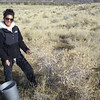 Karen collecting Fourwing saltbush - Atriplex canescens (ATCA2) in Idaho. Photo by BLM ID.