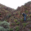 Collecting Gray's biscuitroot - Lomatium grayi (LOGR) in Oregon. Photo by BLM OR.