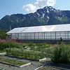 Alaska Plant Materials Center works on Seeds of Success collections.