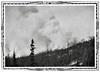 Forest Fire, c. 1930s. Gelatin Silver Print Snapshot