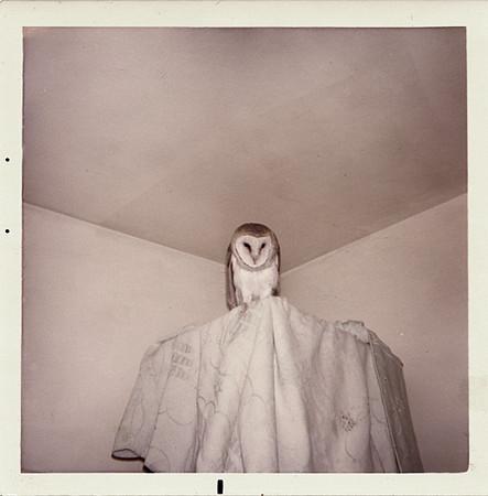 Barn Owl, c. 1960s. Dye Coupler Print Snapshot