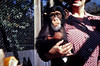 Dean Chittenden, Boston, MA. Mrs. Chittenden Holding Chimp, 1940. Kodachrome Transparency
