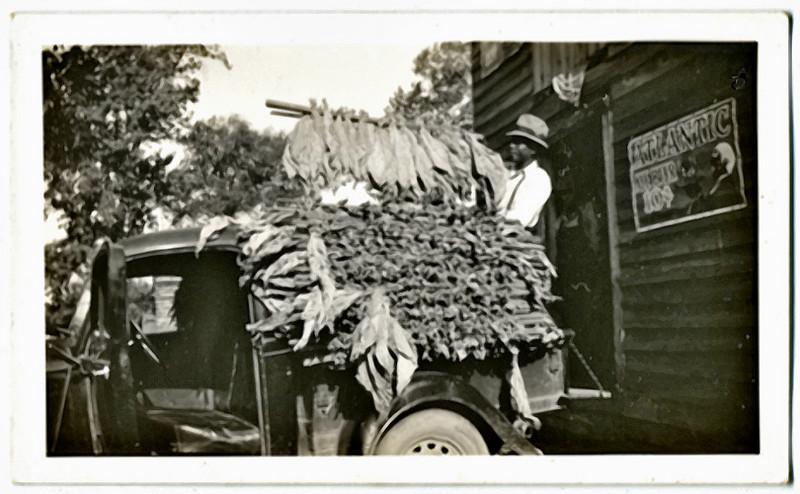 Tobacco Farmer, c. 1930s. Gelatin Silver Print Snapshot