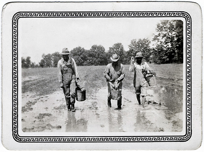 """Sharecroppers Planting Cotton, Seguin Texas, 1927. Gelatin Silver Print Snapshot.  Hand written on verso: """"Muddying in cotton seed 1927."""""""