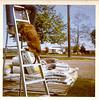 Dog Climbing Ladder, c. 1960s. Dye Coupler Print Snapshot