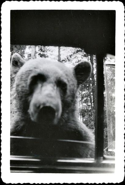 """Tickets Please."" Bear with Head in Car Window, c. 1950s. Gelatin Silver Print Snapshot"