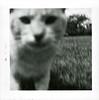 Curious Cat, 1962. Gelatin Silver Print Snapshot