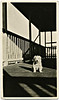 Pup on the Porch, c. 1920s. Gelatin Silver Print Snapshot