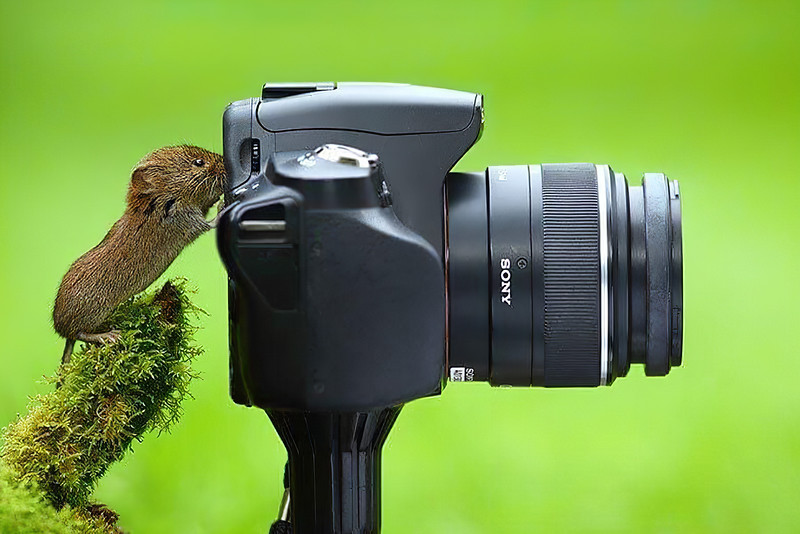 Animals Taking Pictures