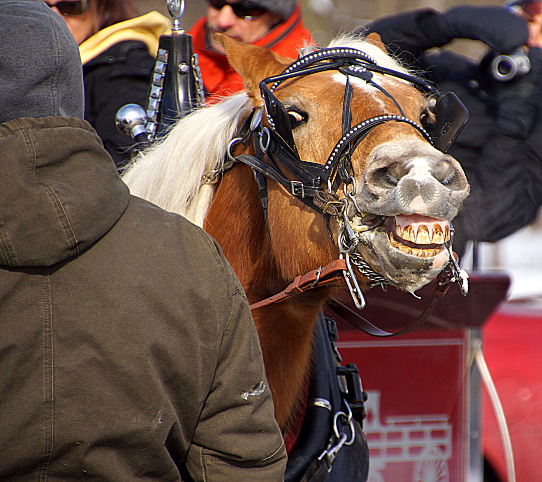 A Horse giving you a Smile