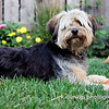 "09.25.09 = Sorry, but I had to post one last pooch pic; this is Callie, my friend Todd's dog.  She is such a sweetie. All four dog's in my last posts, have been adopted.  My last two dogs, Jack and Gracie have been adopted.  I adopted Jack at the age of 7 and he was one day away from being euthanized at the shelter.  He was ""the"" best dog. And now Gracie; she was abandoned at a local pet store by a couple.  Short of sounding like a public service announcement or Bob Barker, please spade and neuter you pets.  The shelters are overrun with innocent pets looking for someone to call them home.  <br /> <br /> ""In a perfect world, every dog would have a home and every home would have a dog."""