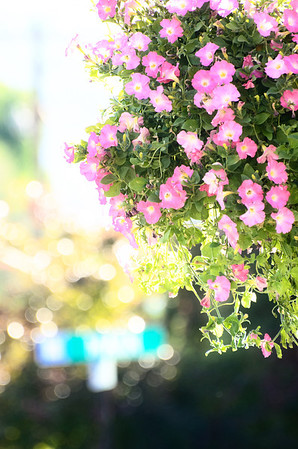 Some hanging flowers in Heber