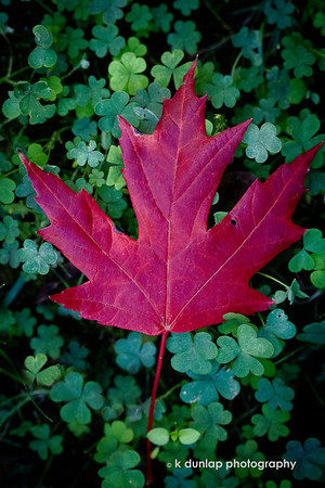 """09.24.13 = Announcing Autumn!<br /> <br /> """"Autumn is a second spring when every leaf is a flower."""""""