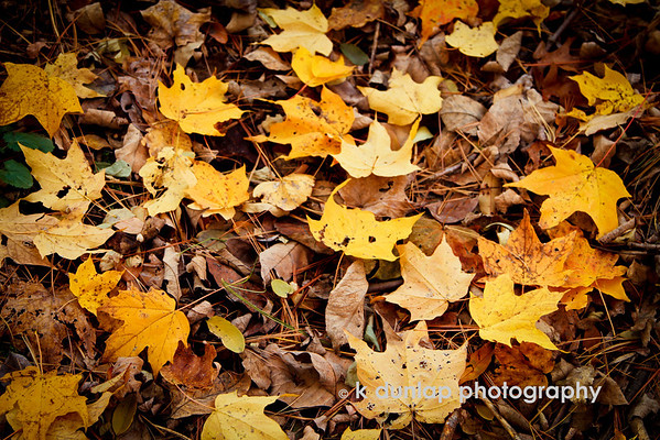 """12.02.13 = Last Minute Color<br /> <br /> I shot this a little over a week ago while out walking Gracie.  We went walking yesterday in the same place and all the color is gone. Everything is dry and brown.  Now I need some snow to brighten things up!  Who's with me?  <br /> <br /> """"Whether the weather is fine,<br /> Whether the weather is not,<br /> Whether the weather be cold,<br /> Whether the weather be hot,<br /> We'll weather the weather,<br /> Whatever the weather,<br /> <br /> Whether we like it or not!"""" ~unknown"""
