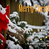 """12.25.14 = Merry Christmas!<br /> <br /> """"Happiness never decreases by being shared."""" Buddha"""