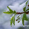 """04.16.14 = Keep the Faith!<br /> <br /> Really, truly, it is SPRING! Mother Nature is just testing us now, that old tease. <br /> <br /> """"No Winter lasts forever, no Spring skips its turn.""""  Hal Borland"""
