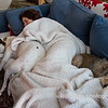 "11.28.14 = Black Friday <br /> <br /> This is what everyone should be doing on Black Friday, fighting for spot on the sofa and not traffic!  There are no expirations on this deal.  <br /> <br /> ""…zzzzzz……zzzzzz…….zzzzzz""  Kasey, Gracie & Lucy too!"