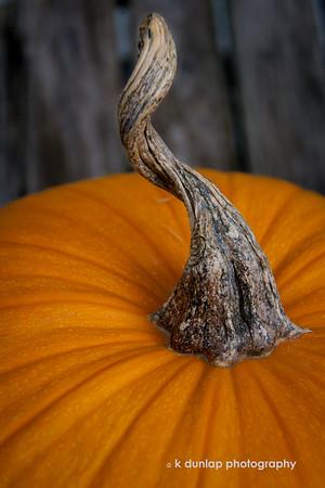 Pumpkin Tails  Tales