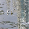 """02.10.14 = Monday<br /> <br /> So, have you heard the one about the two seagulls that floated into town?  It's just a little much needed, Monday humor.  And when you think about it, there are only 52 Monday's in the year; 6 down and 46 to go!  <br /> <br /> """"I would like Monday's if they were later in the week.""""  unknown"""