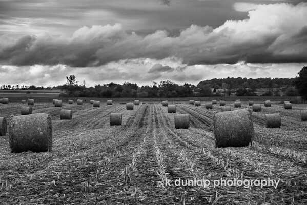 """10.22.14 = Harvest<br /> <br /> """"Before the reward there must be labor. You plant before you harvest. You sow in tears before you reap joy."""" ~Ralph Ransom<br /> <br /> This photo is number FIVE of five in the black & white challenge. Thank you Carole King Murray for passing the challenge on to me.  Its was a great project.  Today I pass the B&W challenge onto photographer Curtis Budden."""