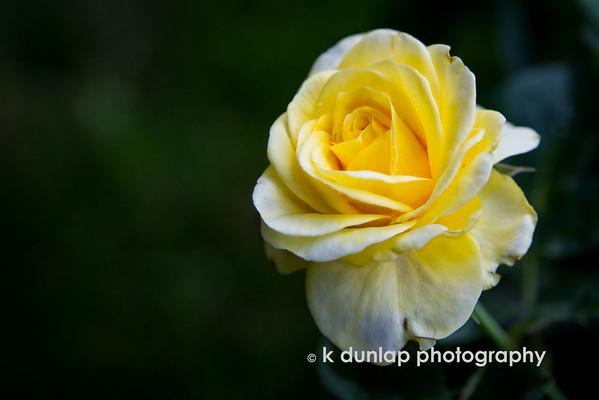 friendship yellow