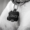 "02.07.16 = Gracie<br /> <br /> ""Whoever said that diamonds are a girls best friend never had a dog.""  Unknown"