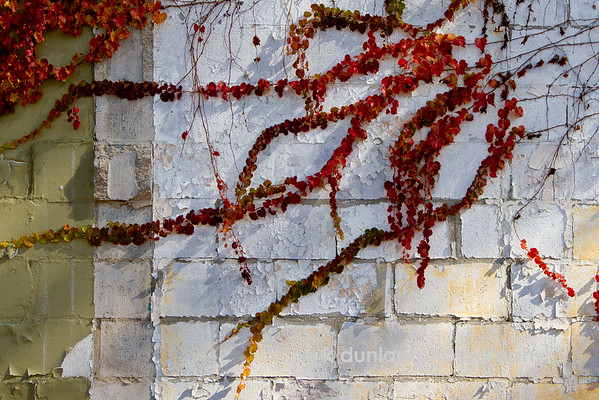 """11.19.16 = Wall Art<br /> <br /> """"Weeds are nature's graffiti.""""  unknown"""