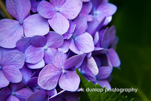 """06.29.17 = Blurpel or Plue<br /> <br /> """"Only Mother Nature with some help from God, can create colors never seen before.""""  k dunlap"""
