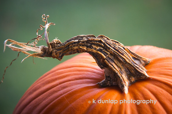 """11.26.19 =  The Pumpkin<br /> <br /> """"Giving and gratitude after all, are words of action.""""    ~unknown"""