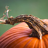 "11.26.19 =  The Pumpkin<br /> <br /> ""Giving and gratitude after all, are words of action.""    ~unknown"