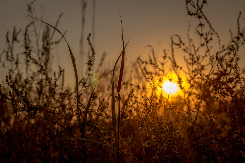 Clinton State Park sunset through prarie grass