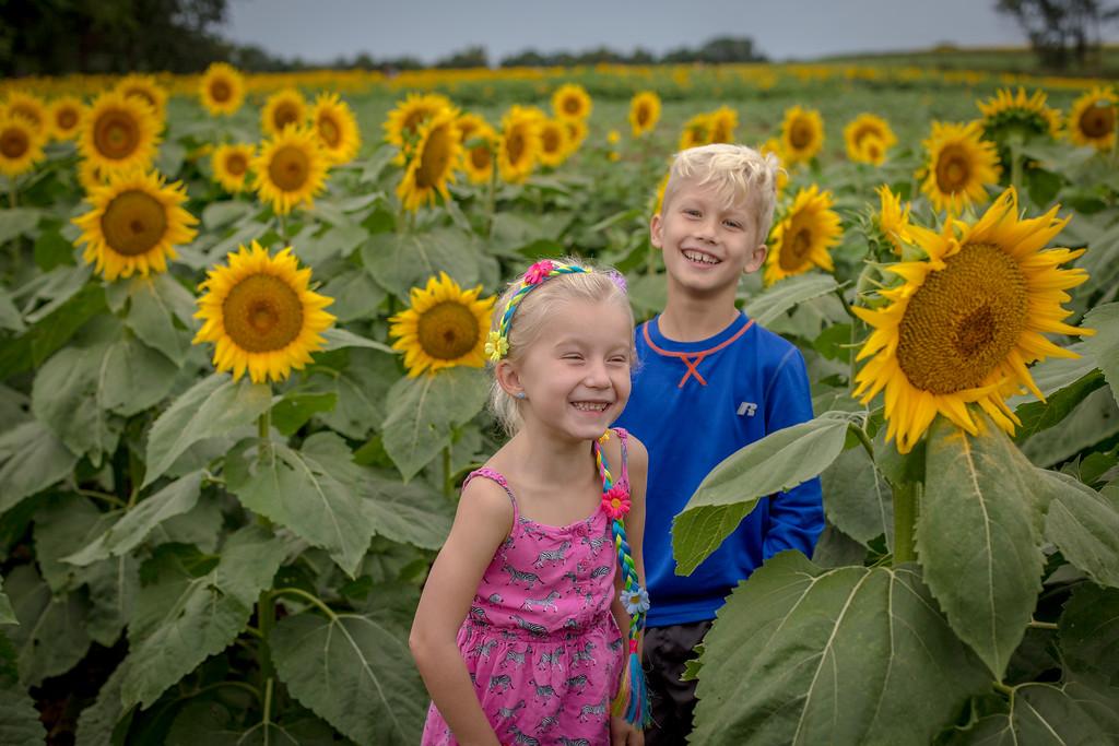 Grinter Farms Sunflowers 9.2016