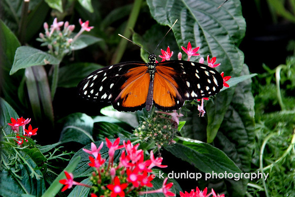 """06.08.10 = Sitting on a flower<br /> <br /> """"Just living is not enough,"""" said the butterfly, """"one must have sunshine, freedom and a little flower.""""  Hans Christian Anderson"""