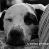 """05.14.10 = Full of Grace  (Gracie)<br /> <br /> """"Properly trained, a man can be dog's best friend.""""  Corey Ford"""