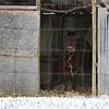 "02.15.11 = A One Horse Barn<br /> <br /> ""This life is not for complaint, but for satisfaction.""  Henry David Thoreau"