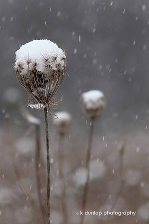 Natures Snowballs