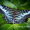 """06.28.12 = The End Result<br /> <br /> """"We all delight in the beauty of the butterfly, but rarely admit to the changes it has gone through to achieve that beauty.""""  Unknown"""
