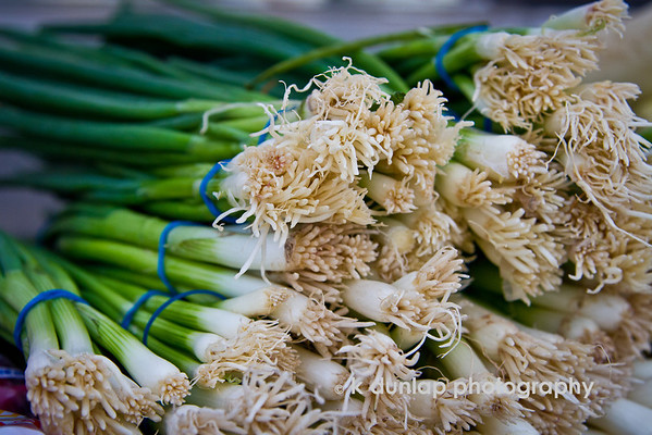 """02.28.12 = Spring Onions<br /> <br /> """"Life expectancy would grow by leaps and bounds if green vegetables smelled as good as beacon."""" Doug Larson"""