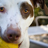 "10.22.12 = Grace in the Face<br /> <br /> ""Dogs are not our whole life, but they make our lives whole."" Roger Caras"