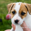 "05.11.15 = Puppies!<br /> <br /> What a way to start your Monday, with a cute puppy pic!  Meet Quinn!  She's an 8+ week old Jack Russell Terrier and the newest addition to my friend Kyla's family. She was quite the little poser for her first photo shoot.  Too cute!  <br /> <br /> ""Whoever said that diamonds are a girls best friend, never owned a dog."""