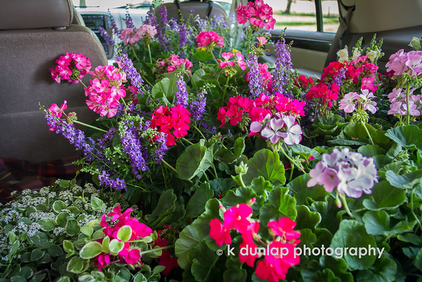 """06.13.15 = Flowers!<br /> <br /> Just a quick shot.  I went flowering (my new word) with my sister the other day.  So thankful for my Ford Explorer.  And we still had room!<br /> <br /> """"Flowers…are a proud assertion that a ray of beauty out values all the utilities of the world.""""  ~Ralph Waldo Emerson"""