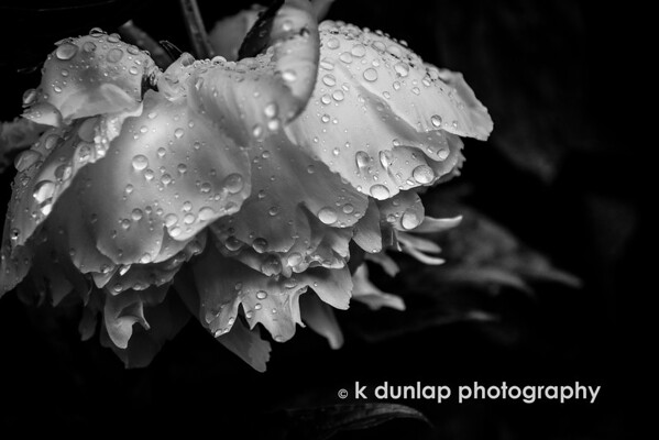 "05.19.15 = Touched<br /> <br /> ""Let the rain kiss you.  Let the rain beat upon your head with silver liquid drops. Let the rain sing you a lullaby.""  ~Langston Hughes"