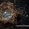 "06.09.10 = Empty Nest<br /> <br /> ""The more tearful the goodbye, the more joyful the hello.""  k dunlap"