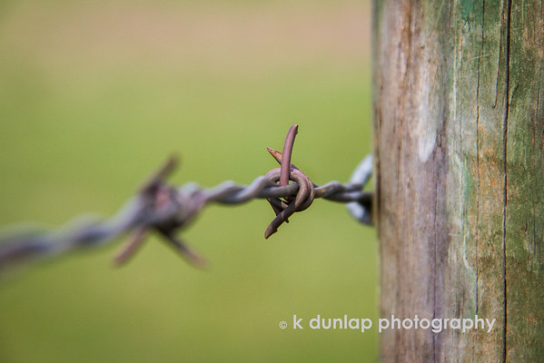 """04.27.15 = De-Fences<br /> <br /> """"So often we put up fences to keep things out, but what really happens is that we end up keeping things in.""""  k dunlap"""
