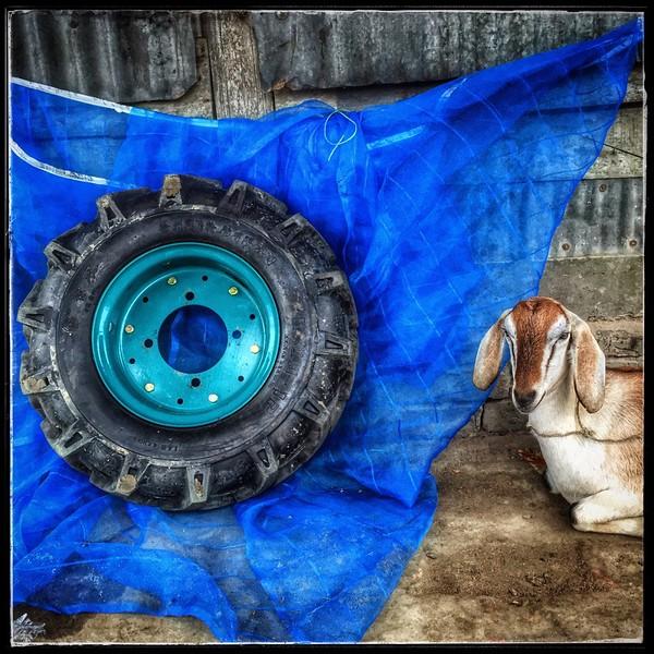 sujanmap-0006-mobile photography