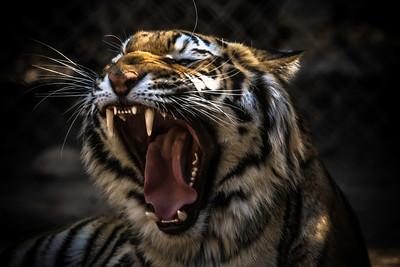 Location:  Wildlife World Zoo in Surprise, AZ