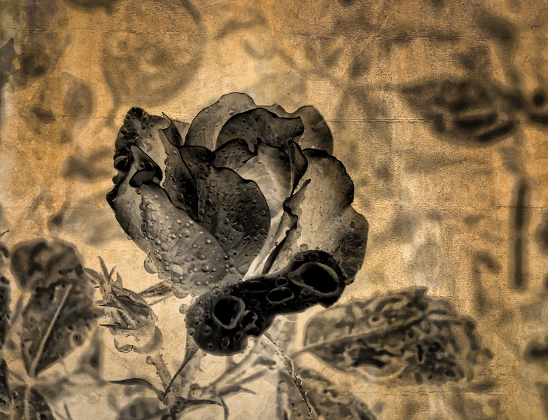 Rose, inverted with added texture layer.