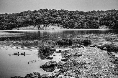 Blue Heron and ducks. Lake Jacomo, Blue Springs, Missouri. Black and white added texture effect.
