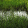 Reflections on Grass<br /> <br /> Copyrighted by Donald G. Stein©, all rights reserved